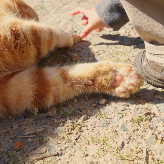 Pink paws are just too cute    farmlifehellip